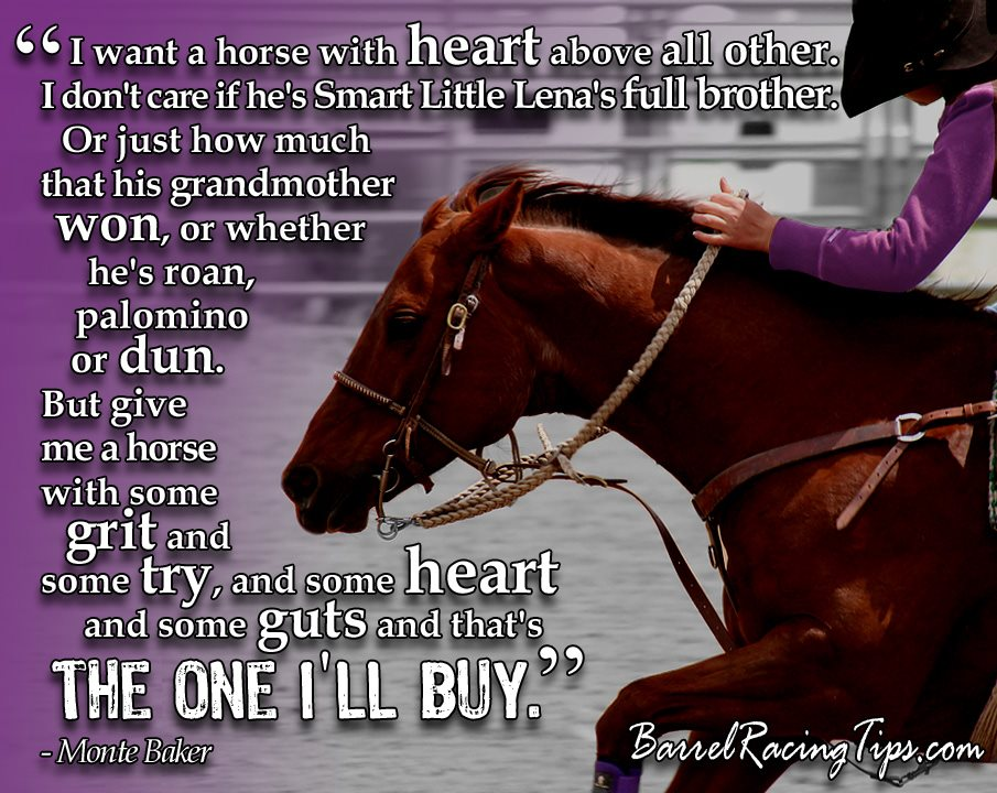 Cool Sailing Quotes Quotesgram: Cool Barrel Racing Quotes. QuotesGram
