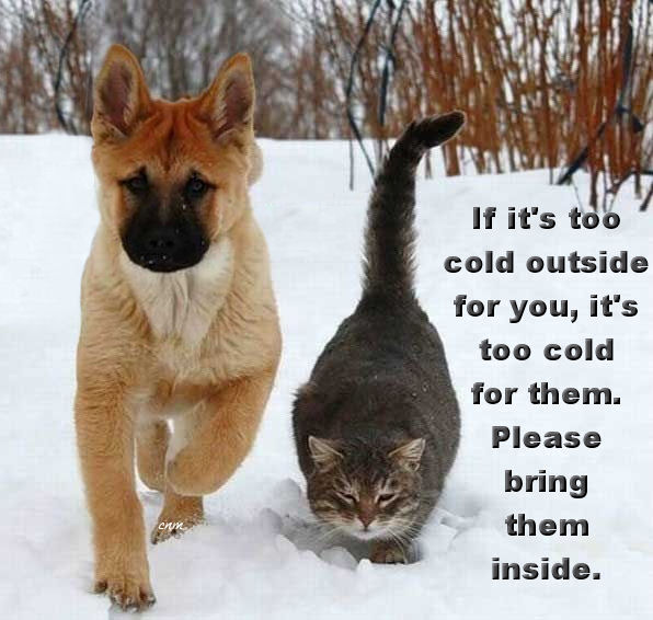 And The Cold Weather Quotes With Pictures Of Dogs. QuotesGram