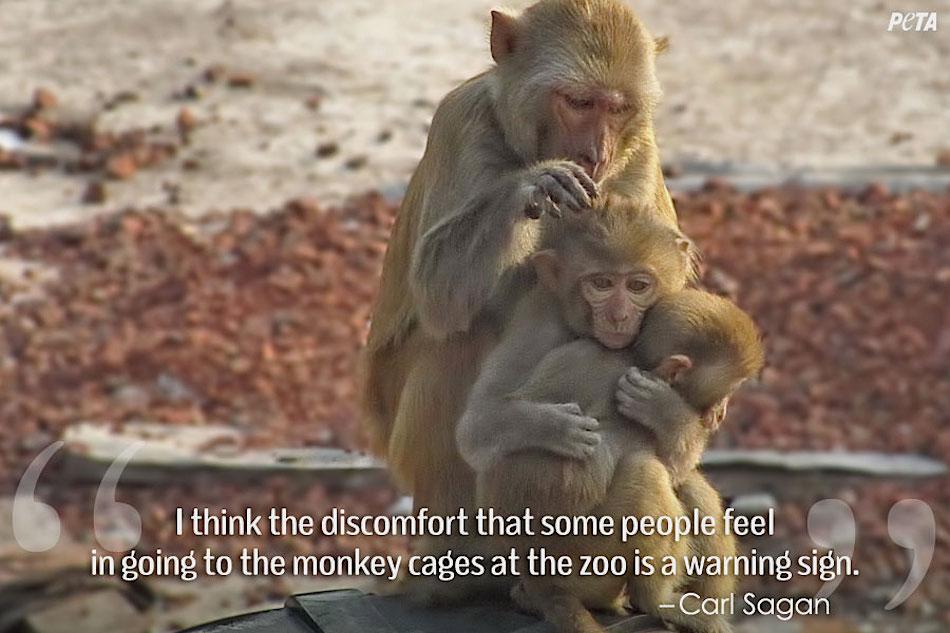 10 Dangerous Animals That Escaped Captivity