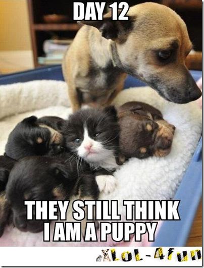 Funny Cats Vs Funny Dogs Guns