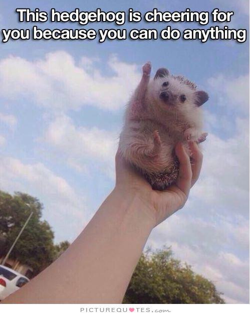 Funny Meme You Can Do It : Hedgehog quotes quotesgram
