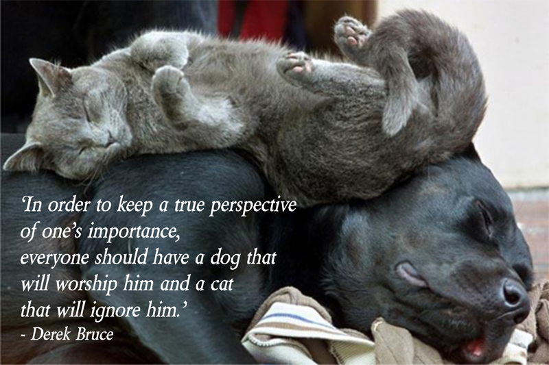 puppies and kittens quotes quotesgram. Black Bedroom Furniture Sets. Home Design Ideas