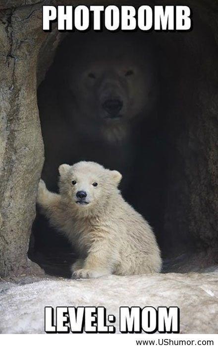 Phrase... Funny polor bear peeing