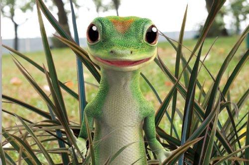 Geico Lizard Quotes. QuotesGram
