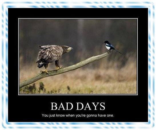 Inspirational Day Quotes: Bad Day Humor Quotes. QuotesGram