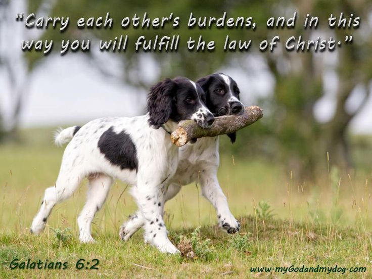 dog bible quotes quotesgram