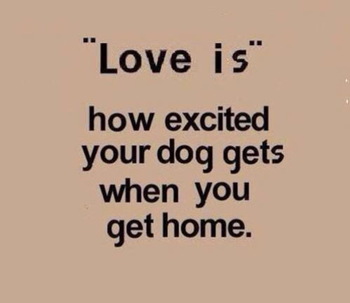 love the home you have pdf