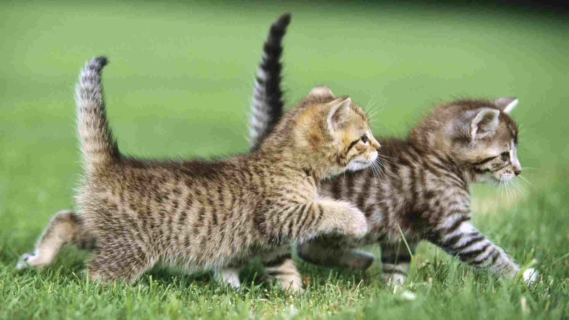 cute kittens quotes - Google Search | MAKES YOU SQUEAL, OR ... |Cute Kittens Quotes