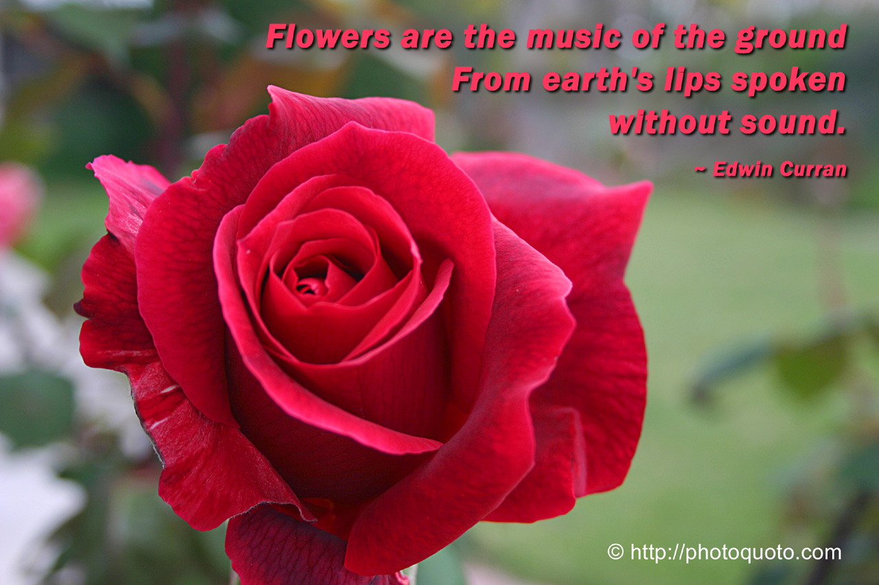 Red Flower Quotes. QuotesGram