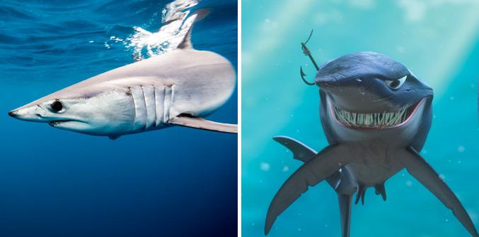 Nemo Shark Quotes. QuotesGram