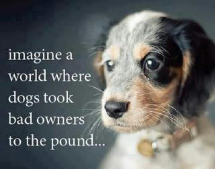 When A Dog Dies Quotes Quotesgram: Bad Dog Quotes. QuotesGram