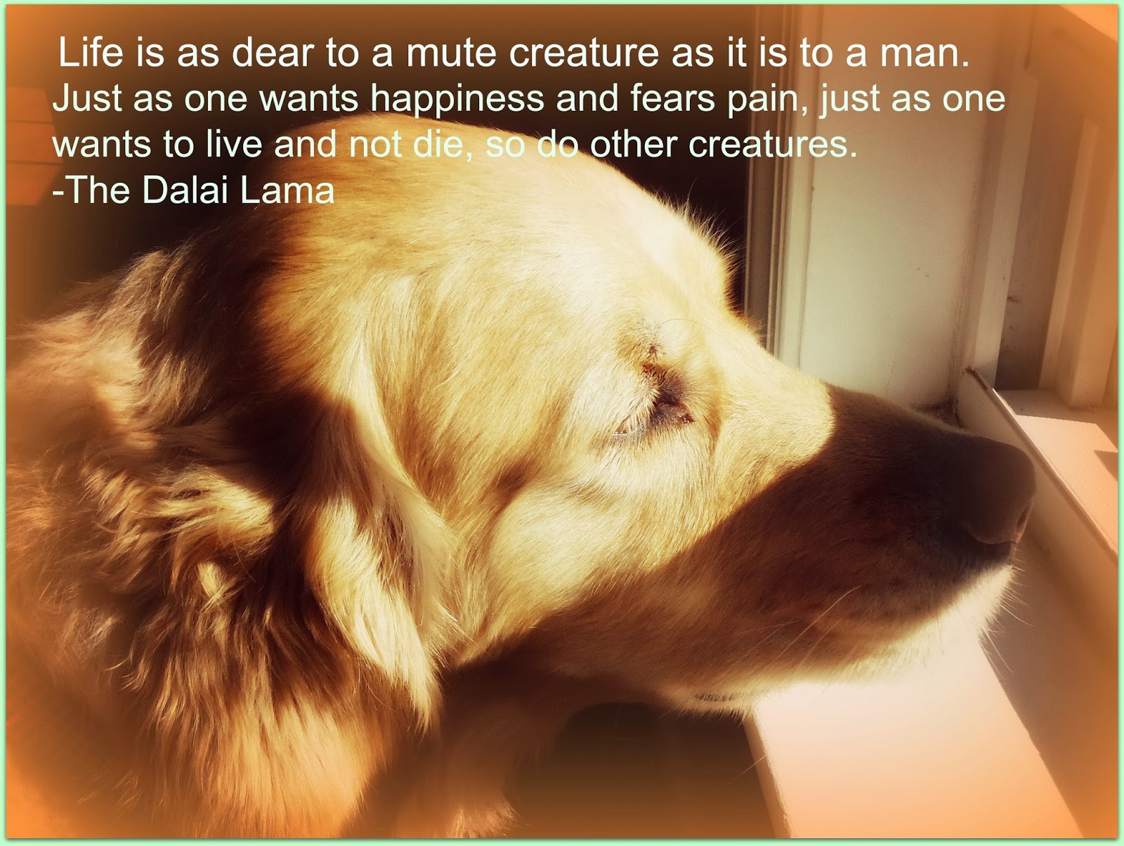Kindness and cruelty quotes