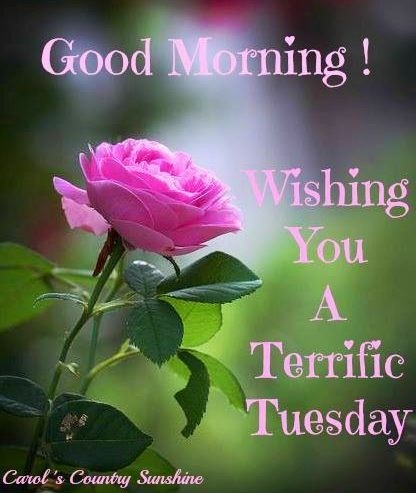 Funny Tuesday Morning Quotes Happy Tuesday F...