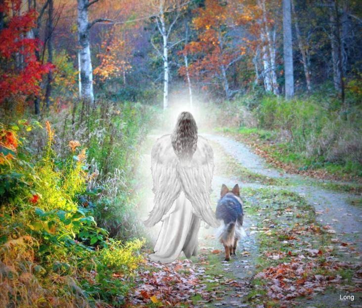 Dog Angel Quotes: Angels In Heaven Dog Quotes. QuotesGram