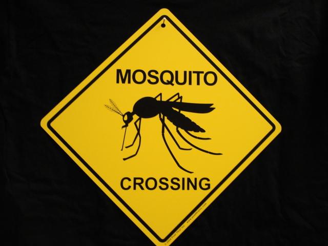 Mosquito Bite Funny Quotes. QuotesGram