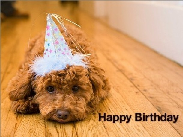 Happy Birthday Dog Quotes ~ Happy birthday quotes from dogs quotesgram