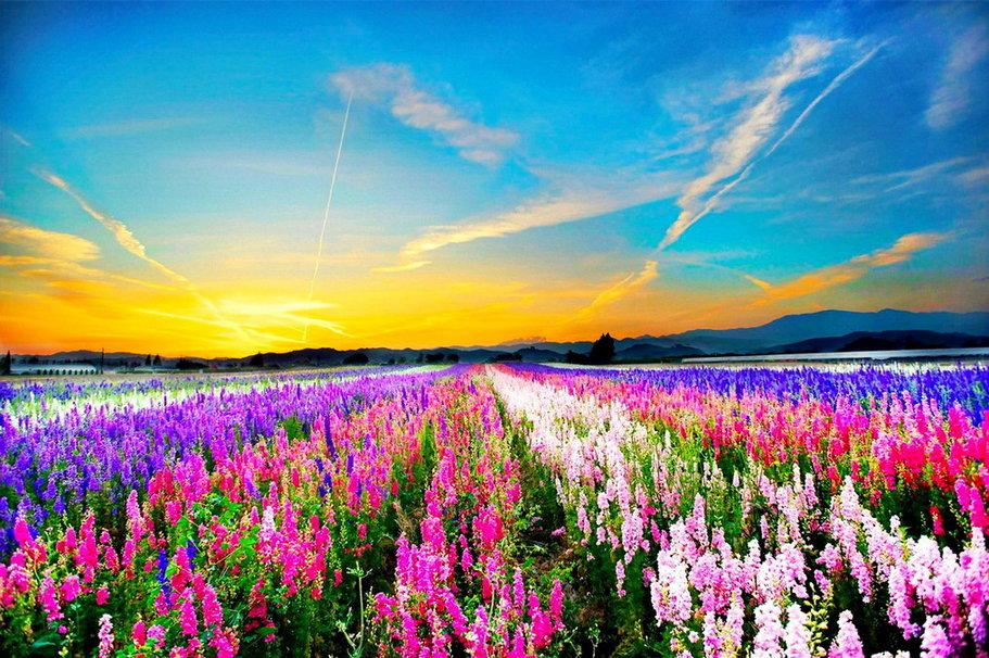 Фото красивых цветов в поле