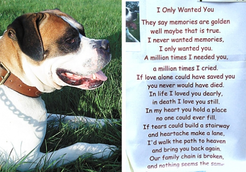When A Dog Dies Quotes Quotesgram: Quotes For Grieving Pet Owners. QuotesGram