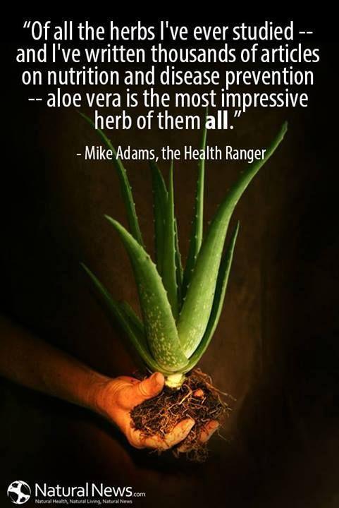 Herbs Quotes Quotesgram