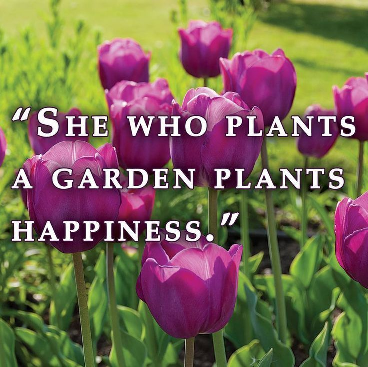 Beautiful Madam In Beautiful Garden Quotes