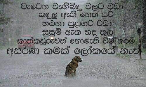 Broken Love Quotes Sinhala Pictures to Pin on Pinterest - PinsDaddy
