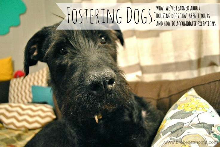 Foster Dog Quotes Quotesgram