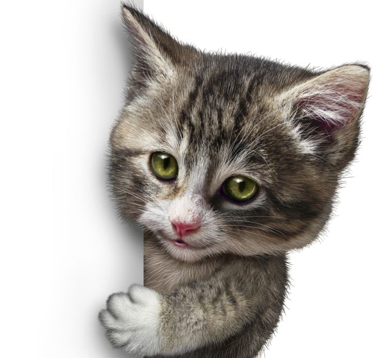 quotes me laughter Cute-Kitten-kittens-laugh happy ... |Cute Kittens Quotes