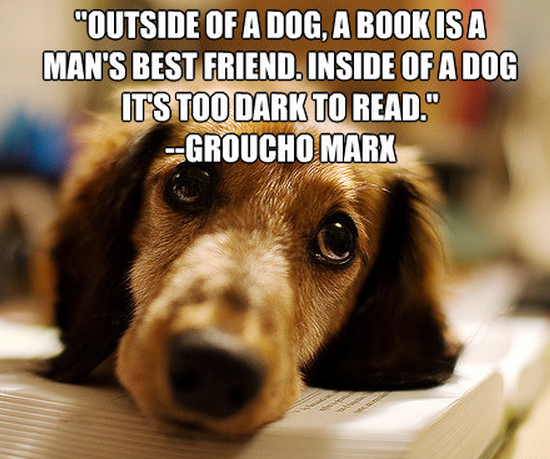 Dog Is Mans Best Friend Quotes