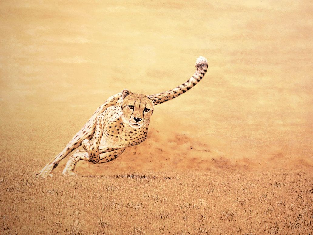 Quotes About Running Cheetah. QuotesGram