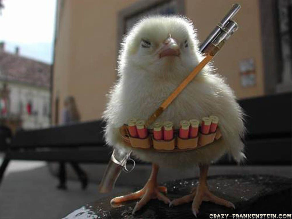Famous Quotes About Chickens: Funny Quotes About Chickens. QuotesGram