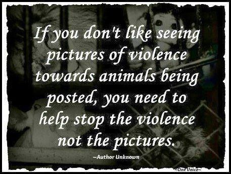 Animal abuse and youth violence