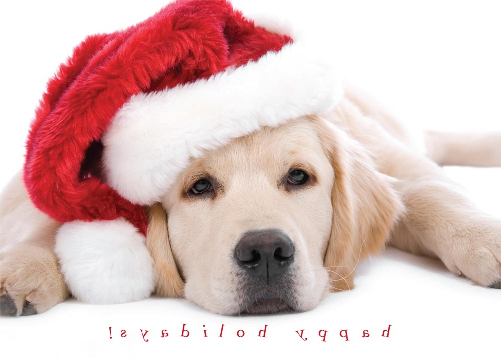 Dog Cat Christmas Cards