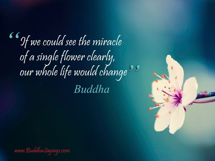 Flower With Buddhism Quotes. QuotesGram