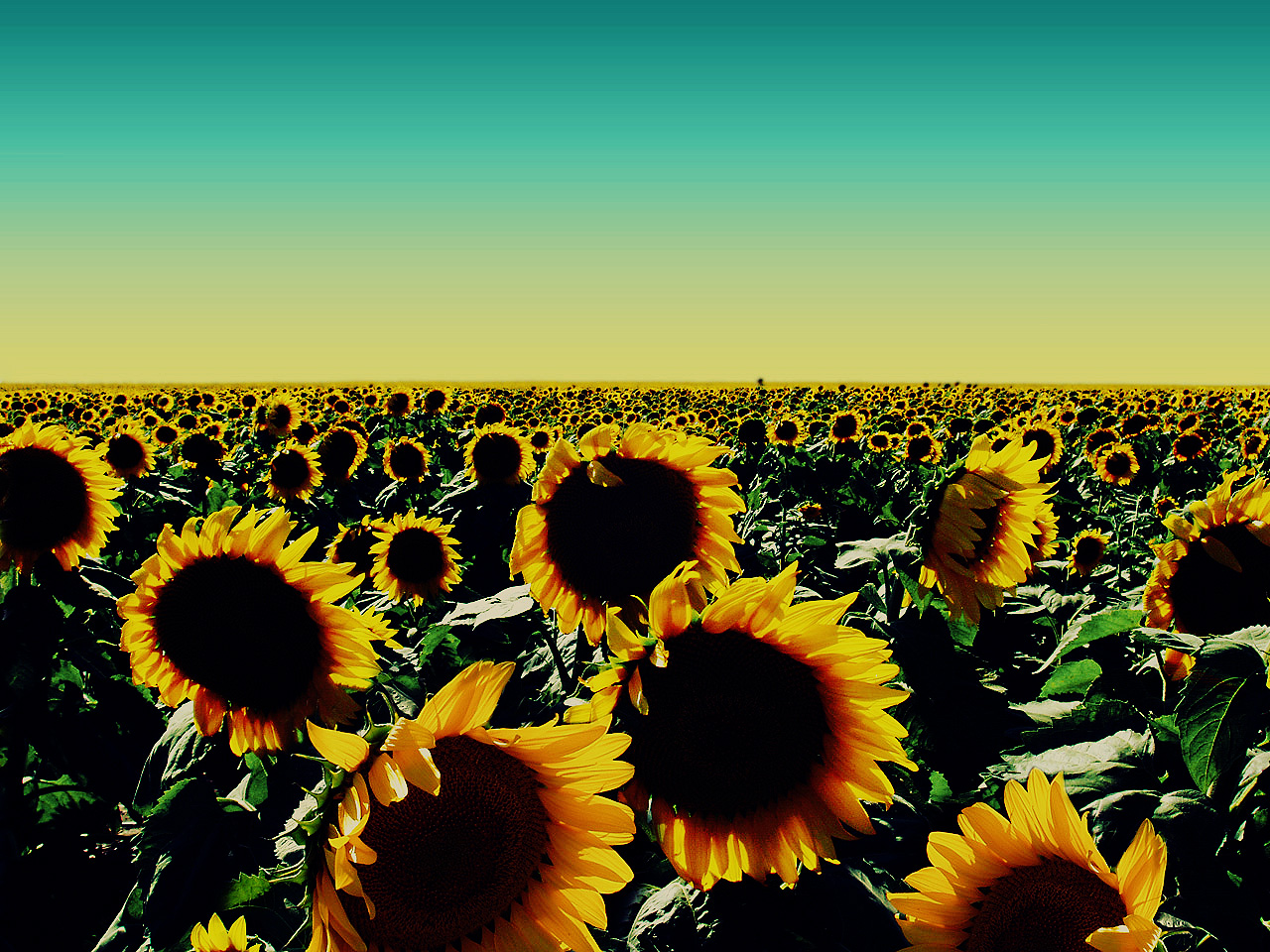 Sunflower Wallpaper With Quotes. QuotesGram