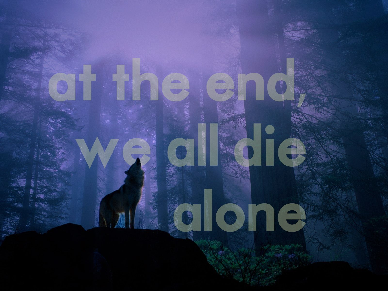 Love The End Wallpaper : cool Lone Wolf Quotes. QuotesGram