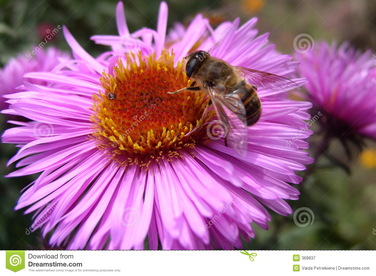 Bees And Flowers Quotes Quotesgram