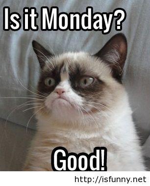 Grumpy Cat Monday Meme