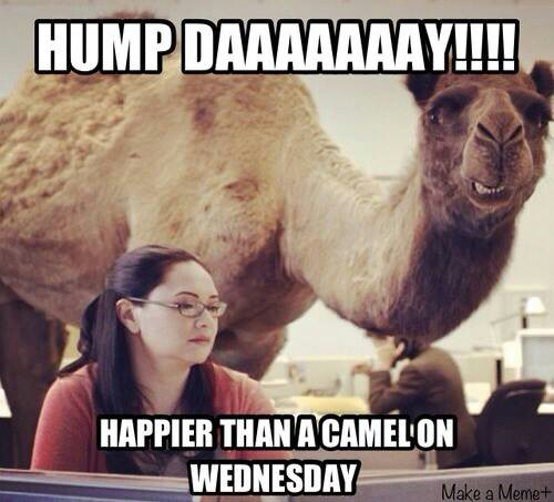 Funny Hump Day Quotes: Happy Hump Day Funny Quotes. QuotesGram
