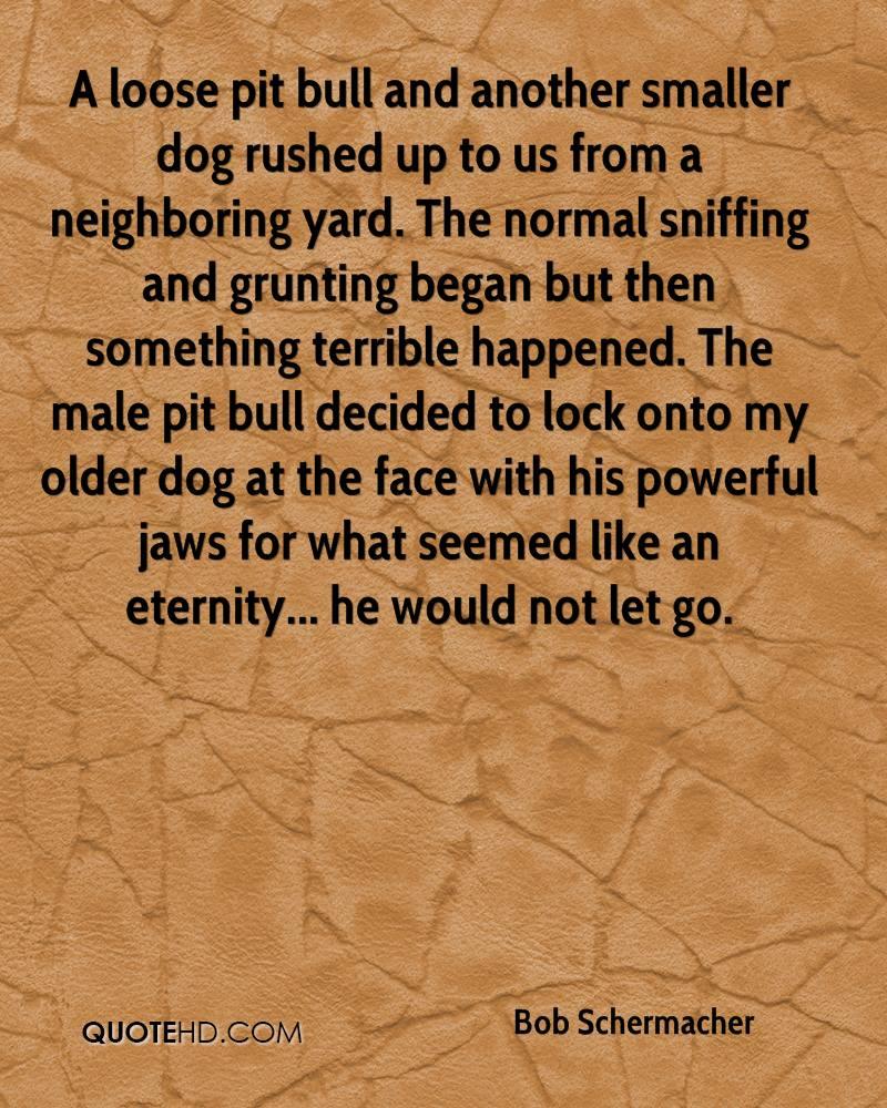 Pit Bull Positive Quotes. QuotesGram