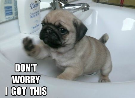Cute Fat Puppy With Quotes Quotesgram