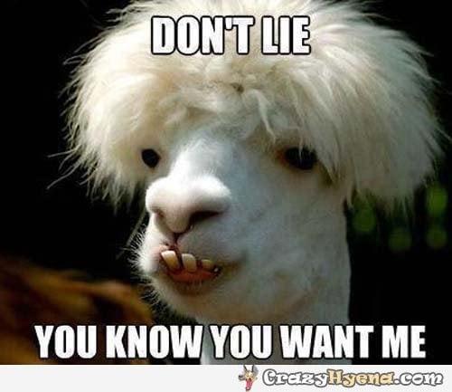 Llamas Quotes Inspirational: Funny Quotes About Llamas. QuotesGram