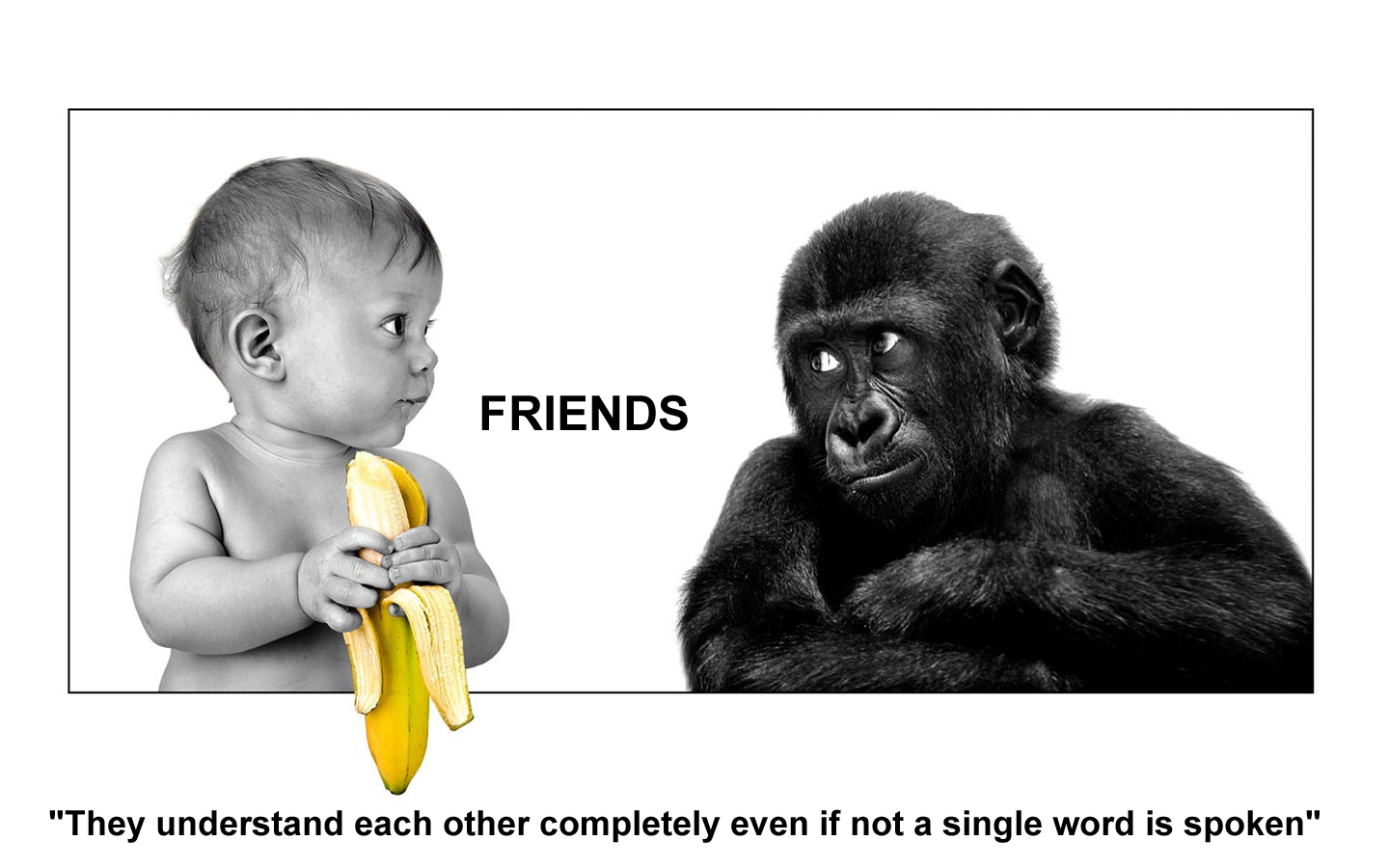 Top 50 Best Friendship Quotes | Quotes and Humor |Funny Quotes True Friend Better
