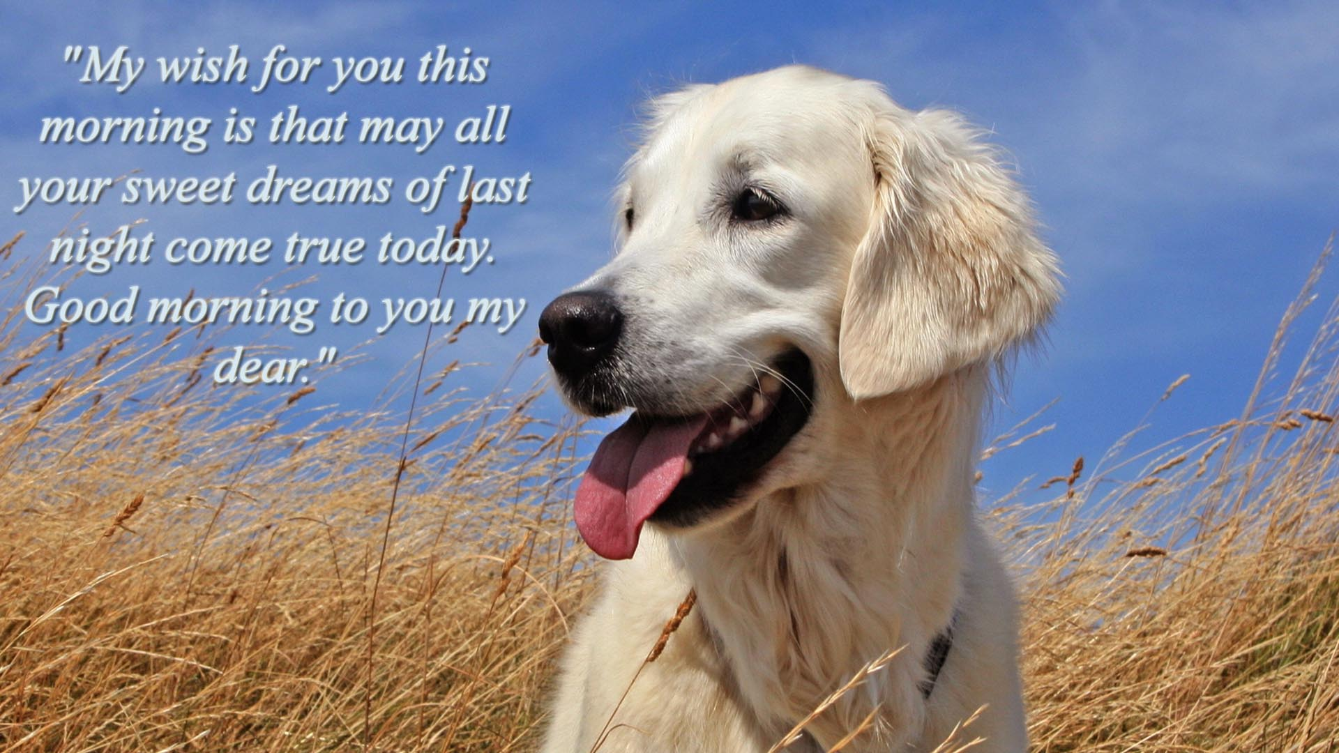Good Morning Quotes With Dogs. QuotesGram