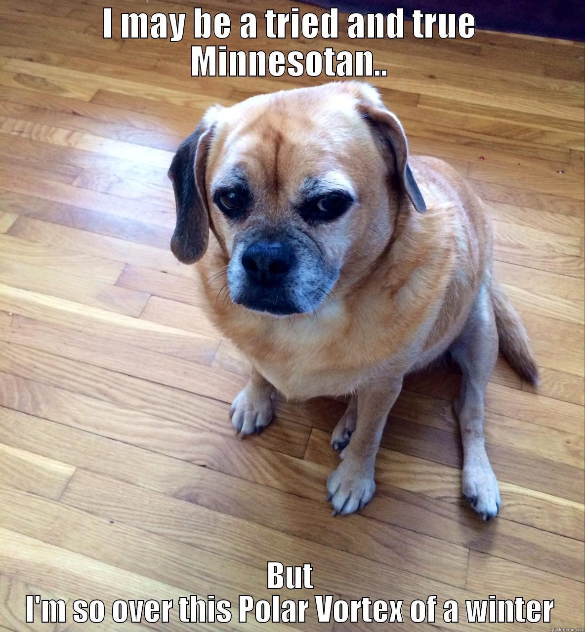 Puggle Dog Quotes Quotesgram