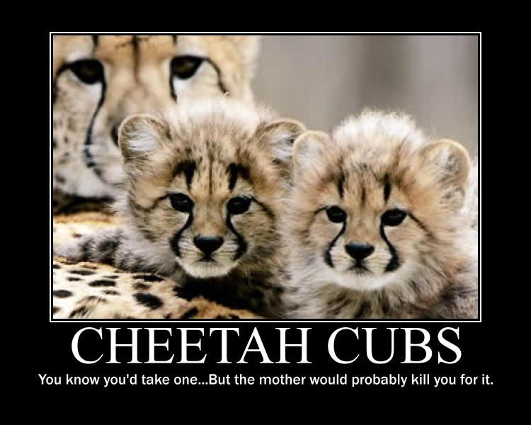 Baby Cheetah Quotes. QuotesGram