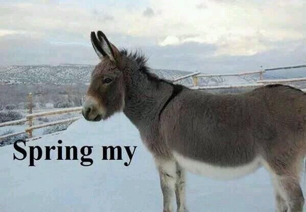 Spring Funny Animal Quotes Quotesgram