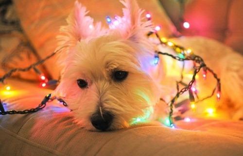 Ugly Christmas Lights