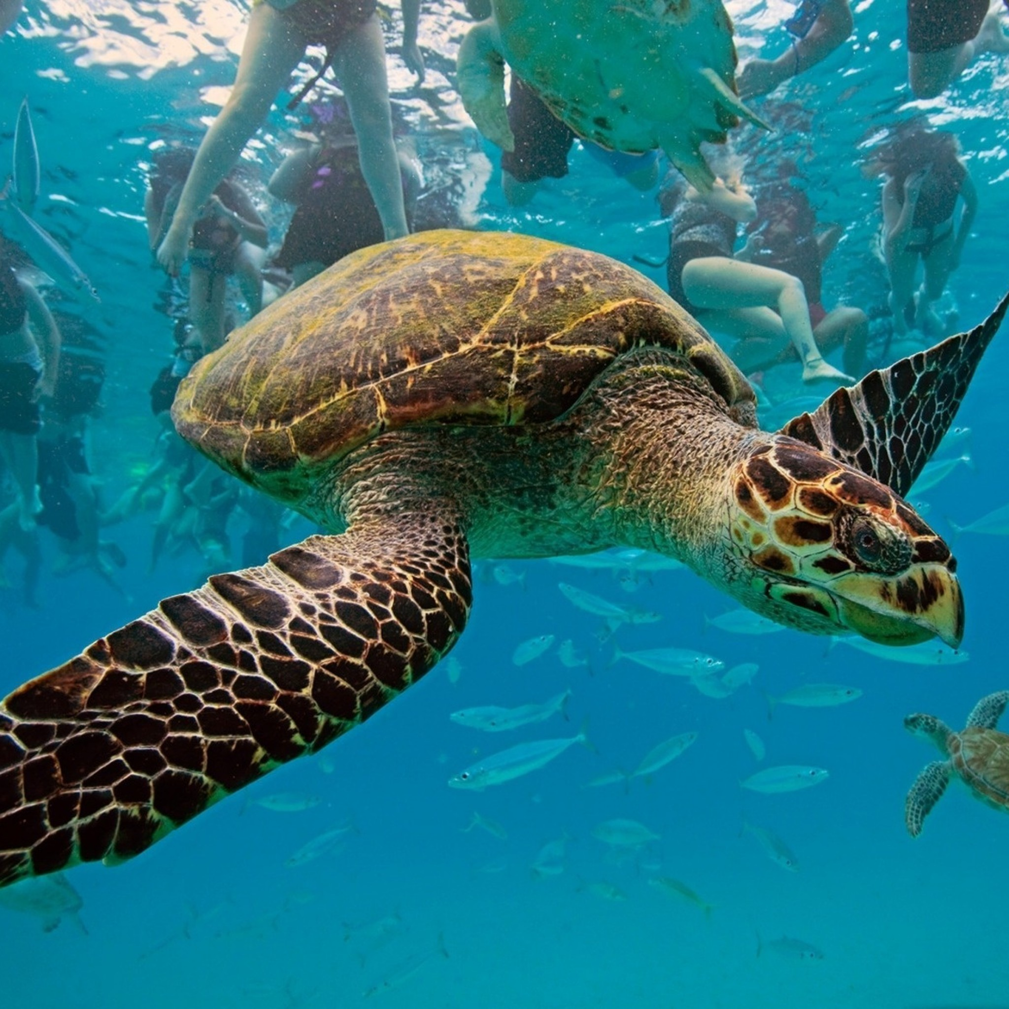 Sea Animal Pictures With Quotes. QuotesGram