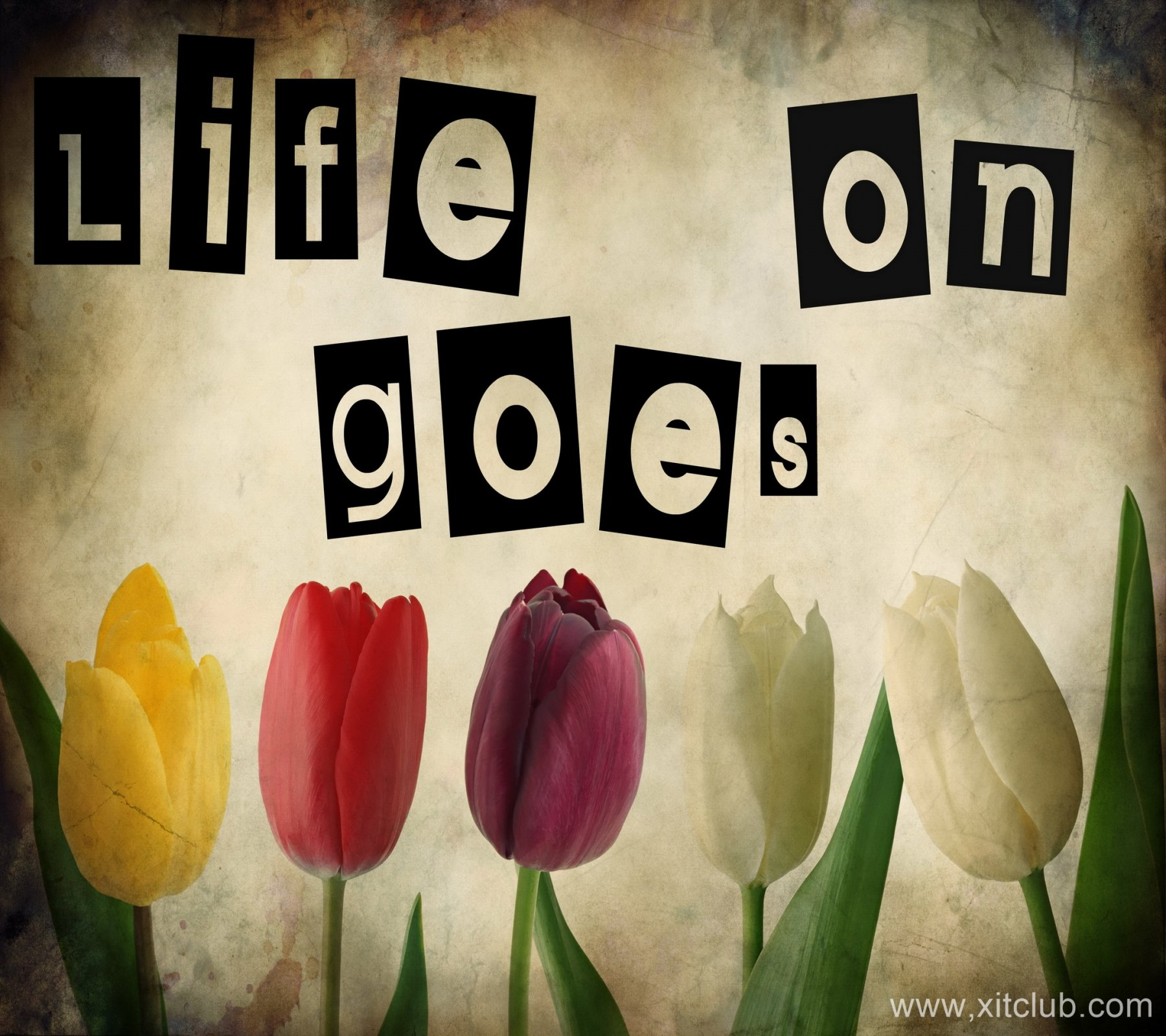 Famous Quotes Life Goes On. QuotesGram