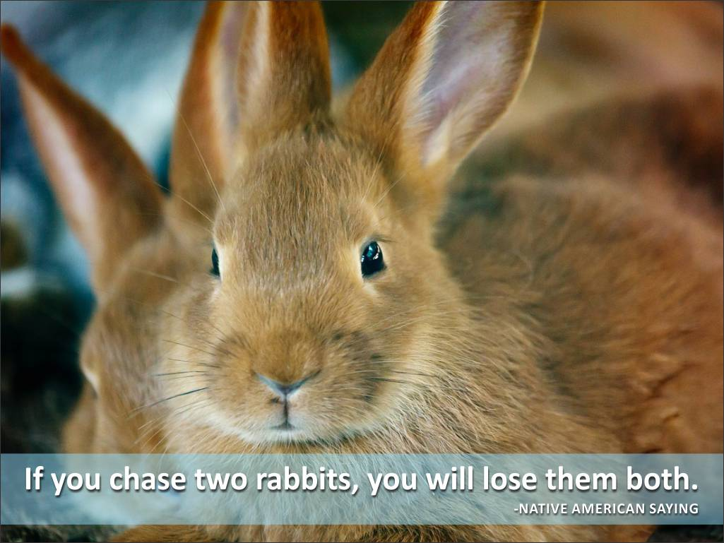 Quotes About Rabbits: Famous Quotes About Rabbits. QuotesGram